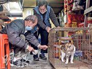 芳姐(中)的排檔在受限區域內,排檔入面養有兩隻貓,自封區後無法餵飼兩日,最終獲消防及民政專員幫忙,救出其中一隻貓「財女」。(朱安妮攝)