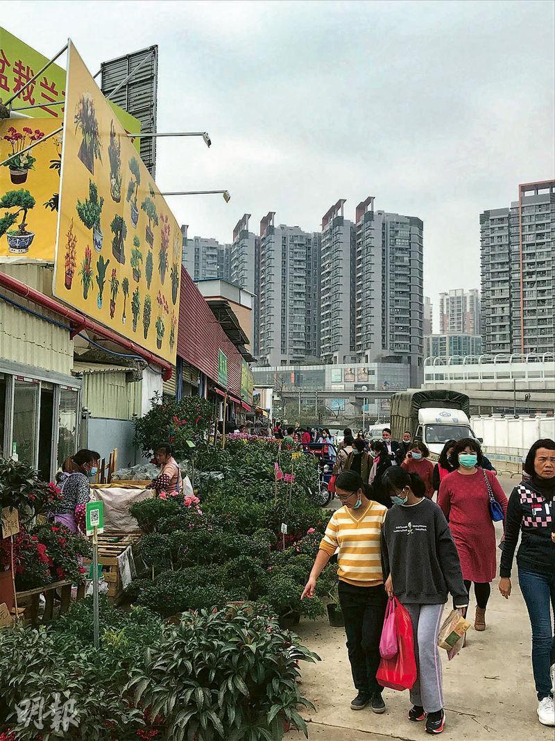 廣州雖然仍有舉辦花市,但規模縮小。不過在廣州西南部芳村的嶺南花卉市場,買花客仍絡繹不絕,運送花卉年桔的貨車進進出出,十分繁忙。(明報記者攝)