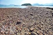 連島沙洲在潮退時像沙路連接兩島。圖為橋咀島。
