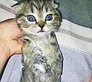網上流傳相片,顯示一名女子涉嫌以保鮮紙綑綁罰貓。(網上圖片)