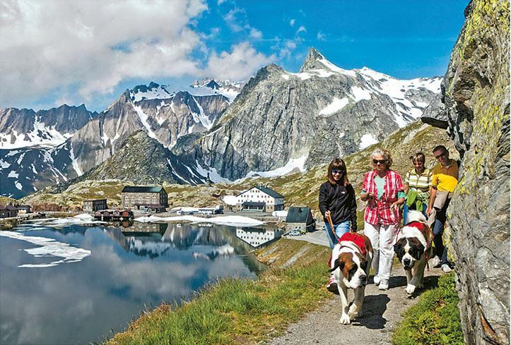在瑞士,寵物是家庭成員,要好好對待,圖中是瑞士「國犬」聖班納犬。(瑞士國家旅遊局提供)